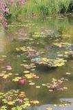 Fleurs et couleur en Italie Photo stock