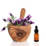 Fleurs et essence d'herbe de lavande Photos stock