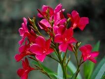 Fleurs et feuilles Photos libres de droits