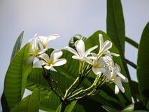 Fleurs et feuilles Photos stock