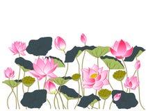 Fleurs et feuilles de lotus Photo libre de droits