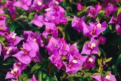 Fleurs et feuilles, fond de ressort Photos libres de droits