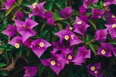 Fleurs et feuilles, fond de ressort Images stock
