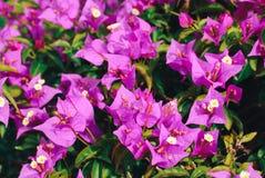 Fleurs et feuilles, fond de ressort Photographie stock libre de droits