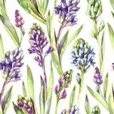 Fleurs et feuilles sans couture de jacinthes de modèle Illustration d'aquarelle de ressort aux nuances violettes Texture botaniqu Photos libres de droits