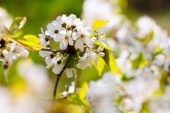 Fleurs et fleur au printemps photographie stock libre de droits