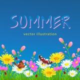 Fleurs et frontière d'herbe, fleurs colorées lumineuses de pré et herbe verte, papillons et coccinelle contre le ciel bleu Images stock