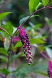 Fleurs et fruits de différents degrés de maturité sur un groupe d'une usine inconnue dans le jardin botanique de Sotchi Russie photographie stock
