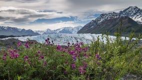 Fleurs et glace Photographie stock libre de droits