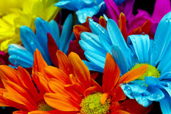 Fleurs et gouttelettes d'eau colorées Photographie stock libre de droits