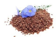 Fleurs et graines d'usitatissimum de Linum Image libre de droits
