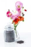 Fleurs et graines de pavot images libres de droits