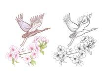 Fleurs et grue Ensemble de dessin coloré témoin et d'ensemble Photo stock