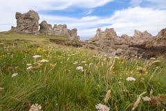 Fleurs et hdr de roches Image libre de droits