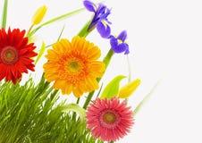 Fleurs et herbe Photo libre de droits