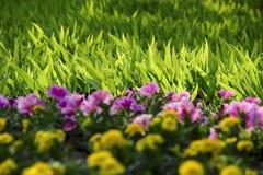 Fleurs et herbe Photos stock