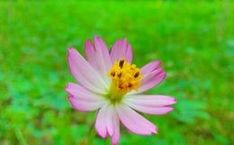 Fleurs et herbe Image stock
