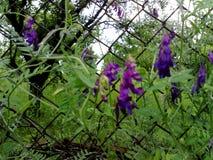 Fleurs et herbe de ressort Photo libre de droits