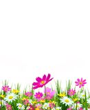 Fleurs et herbe de source Images stock