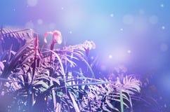Fleurs et herbe sur un beau fond lilas-bleu brouillé image images libres de droits