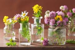 Fleurs et herbes médicales colorées dans des bouteilles Images libres de droits