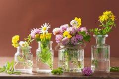 Fleurs et herbes médicales colorées dans des pots Photographie stock libre de droits