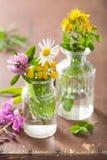 Fleurs et herbes médicales colorées dans des pots en verre Images stock
