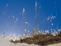 Fleurs et herbes rétro-éclairées sur un mur à Casares Espagne Photographie stock