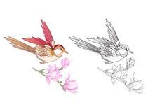 Fleurs et hirondelle Ensemble de dessin coloré témoin et d'ensemble Photo stock