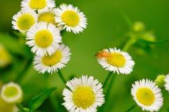 Fleurs et insectes Photographie stock