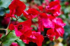 Fleurs et jardins Images stock