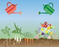 Fleurs et légumes Image libre de droits