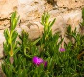 Fleurs et lézard de Sringtime photographie stock libre de droits