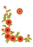 Fleurs et lames oranges sur un fond blanc Photo stock