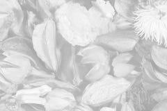 Fleurs et lames sèches image stock
