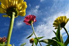 Fleurs et le ciel bleu Images libres de droits