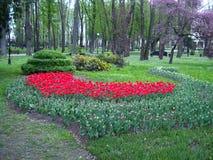Fleurs et lits de fleur photo stock