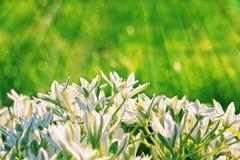 Fleurs et lumière du soleil de matin Photos stock