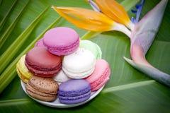 Fleurs et macarons français Photographie stock libre de droits
