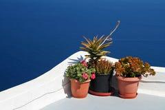 Fleurs et mer Photographie stock libre de droits
