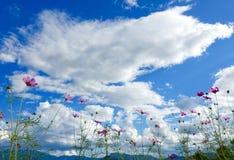 Fleurs et montagne Photo stock