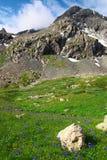 Fleurs et montagnes. Images stock