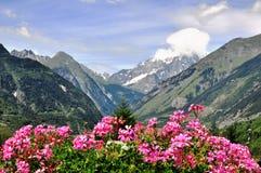 Fleurs et montagnes Photo stock