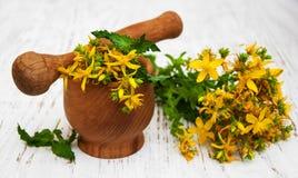 Fleurs et mortier de Tutsan images stock