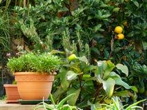Fleurs et oranges dans le jardin vert Image libre de droits