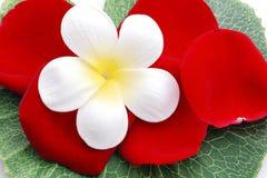 Fleurs et pétales roses Image libre de droits