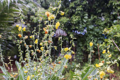 Fleurs et papillon de pré sur la fleur Photos stock