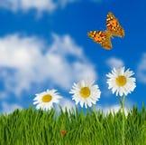fleurs et papillons dans le plan rapproché de jardin Images stock