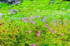 fleurs et paysage photos libres de droits