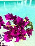 Fleurs et piscine d'eau photographie stock libre de droits